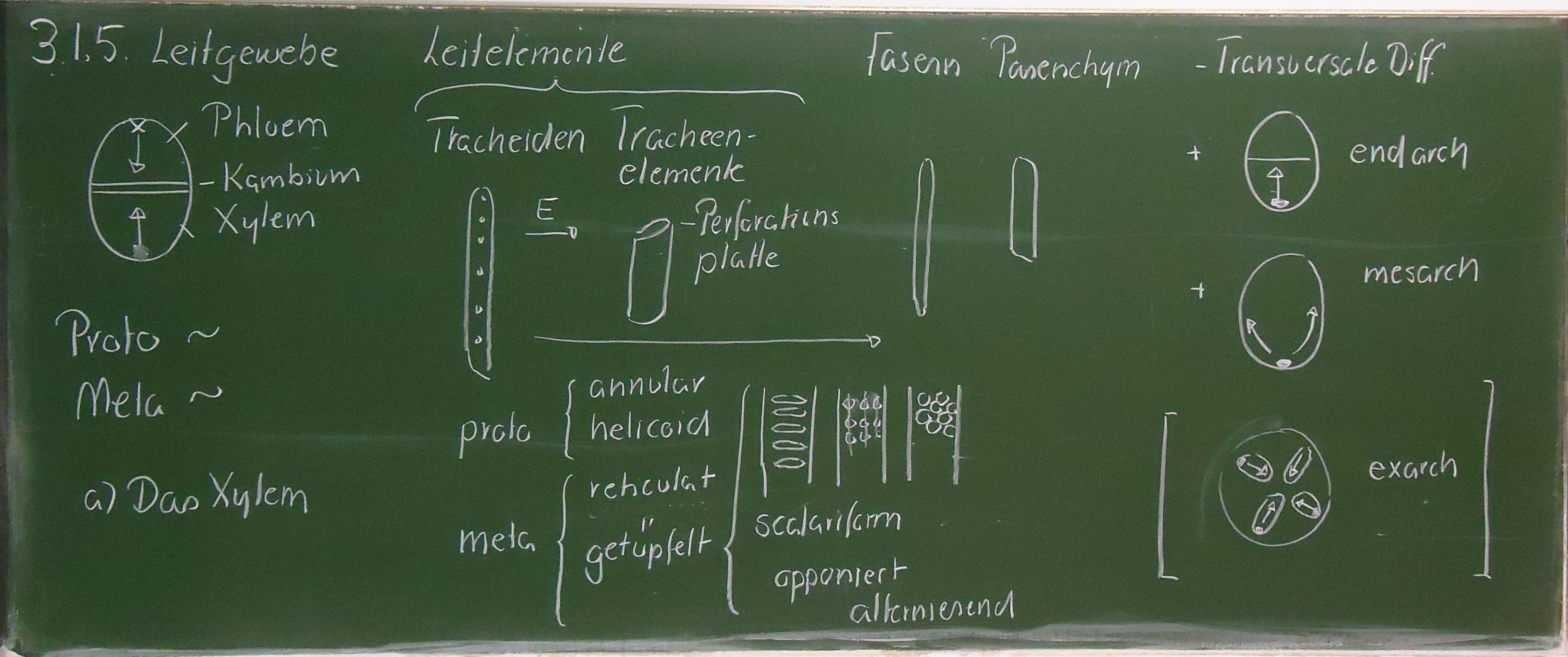 3. Anatomie der Achse - Universität Ulm