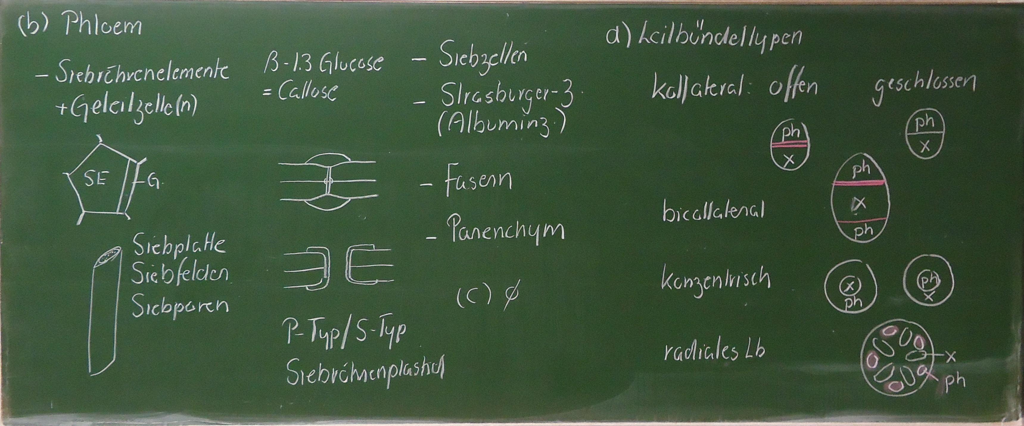 3. Anatomie der Achse - Ulm University