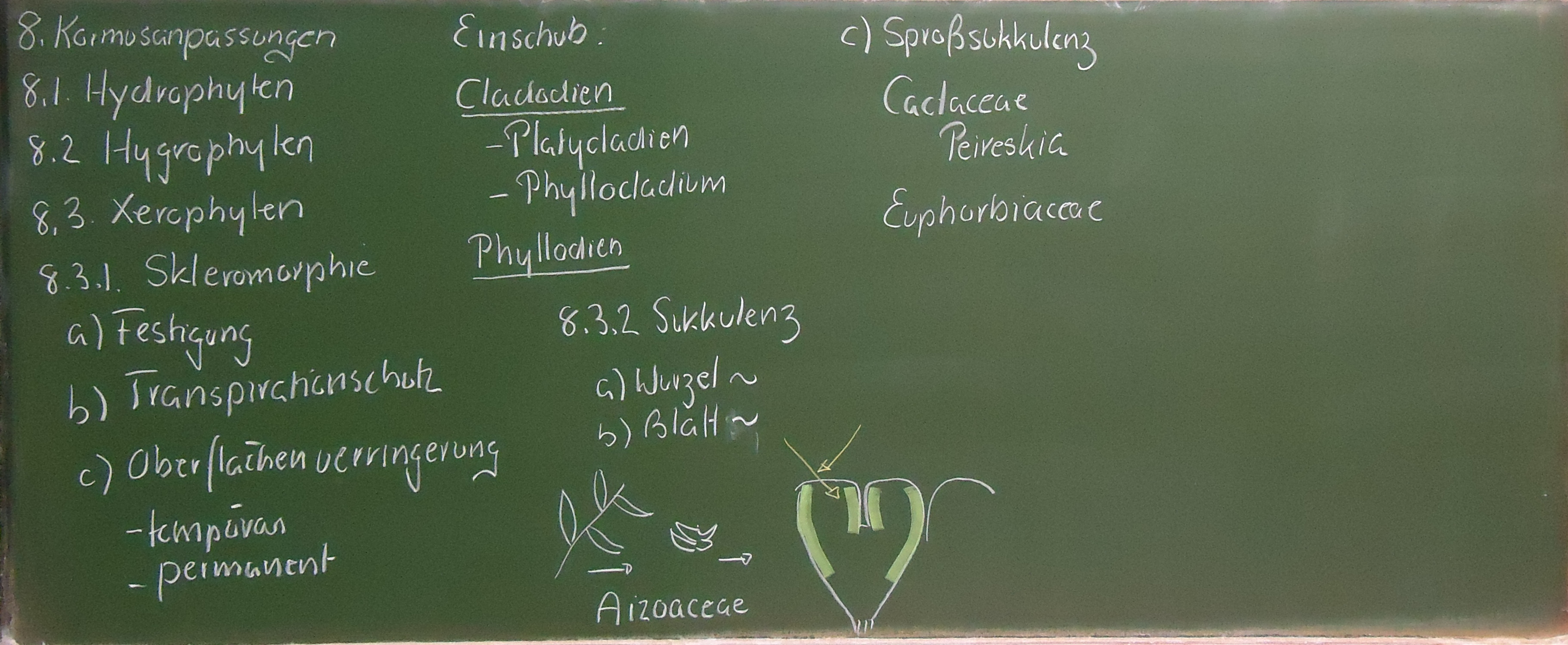 8. Kormusanpassungen - Ulm University