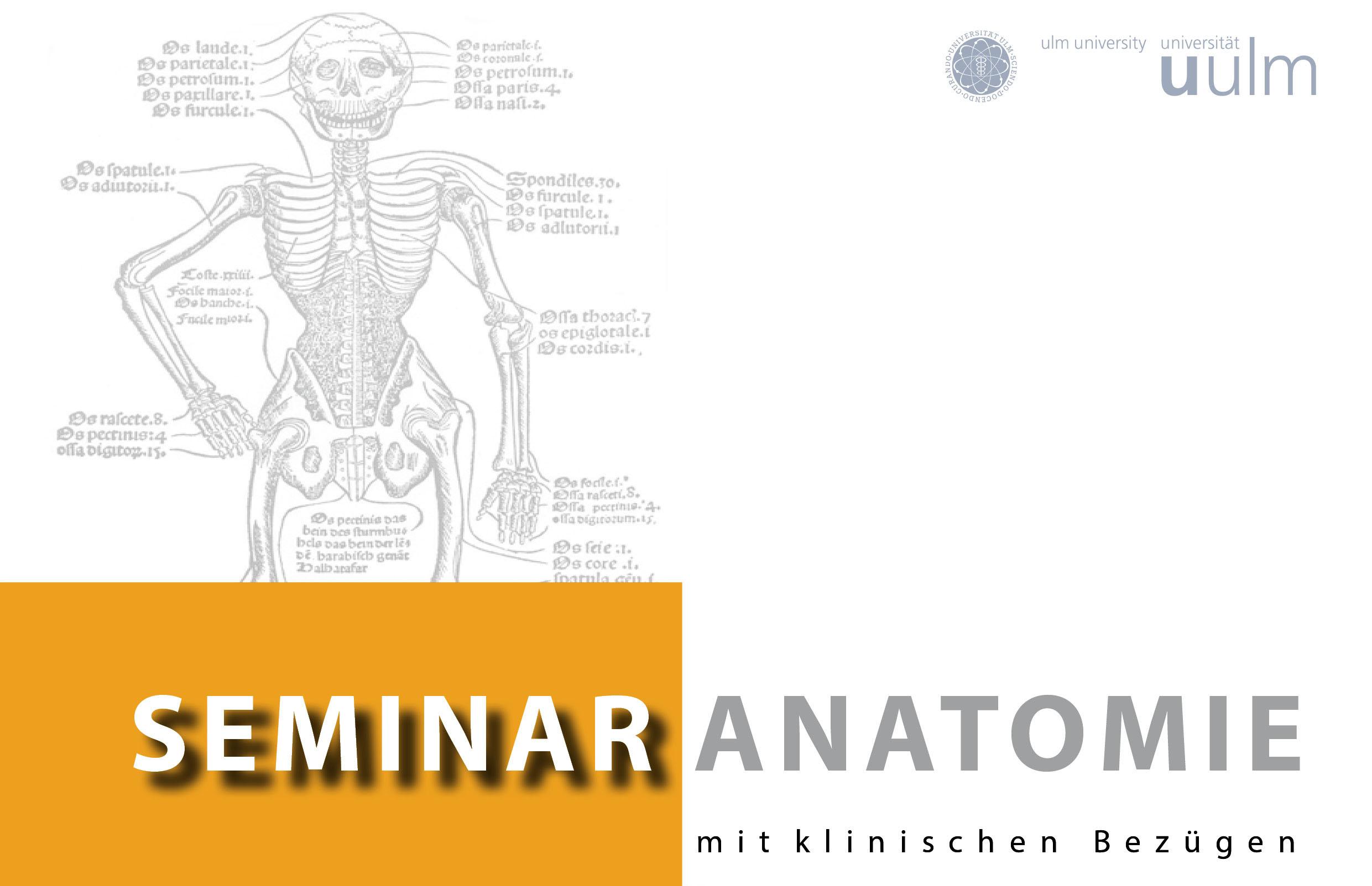 Seminar Anatomie mit klinischen Bezügen - Universität Ulm