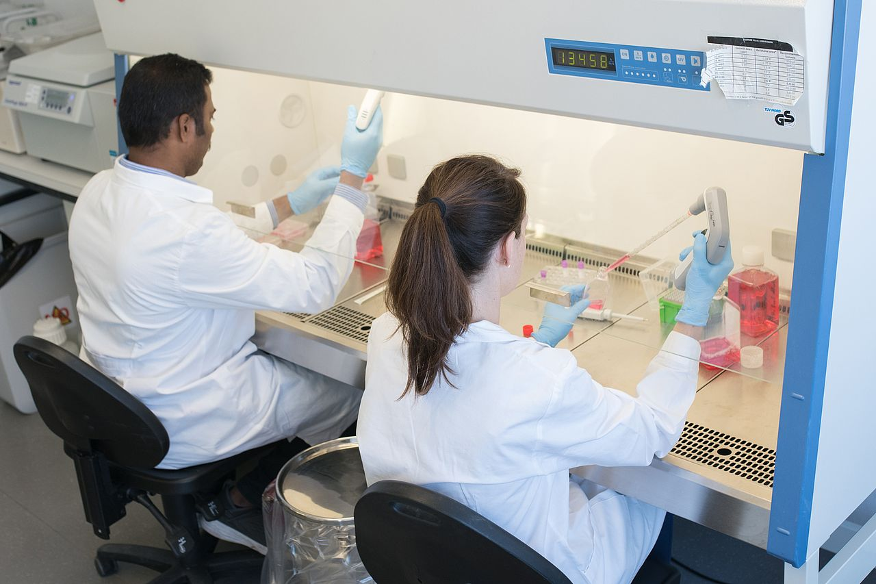 Photo: Working with mammaliam cell cultures on the sterile workbench