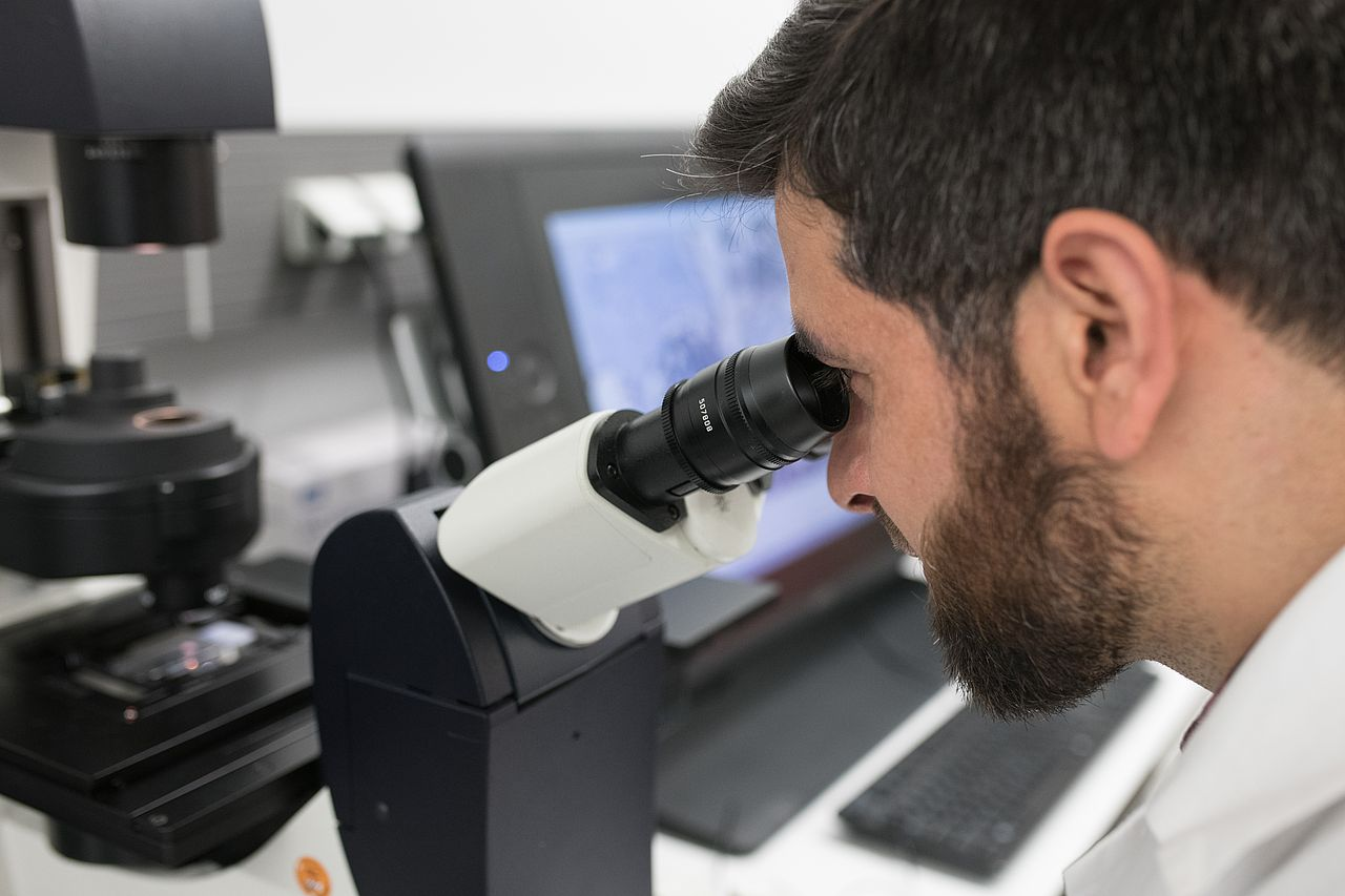 Photo: Analysis of histological sections at the microscope