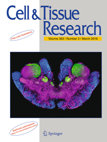 Article cover Stemme et al 2016 Olfactory pathway in Xibalbanus tulumensis