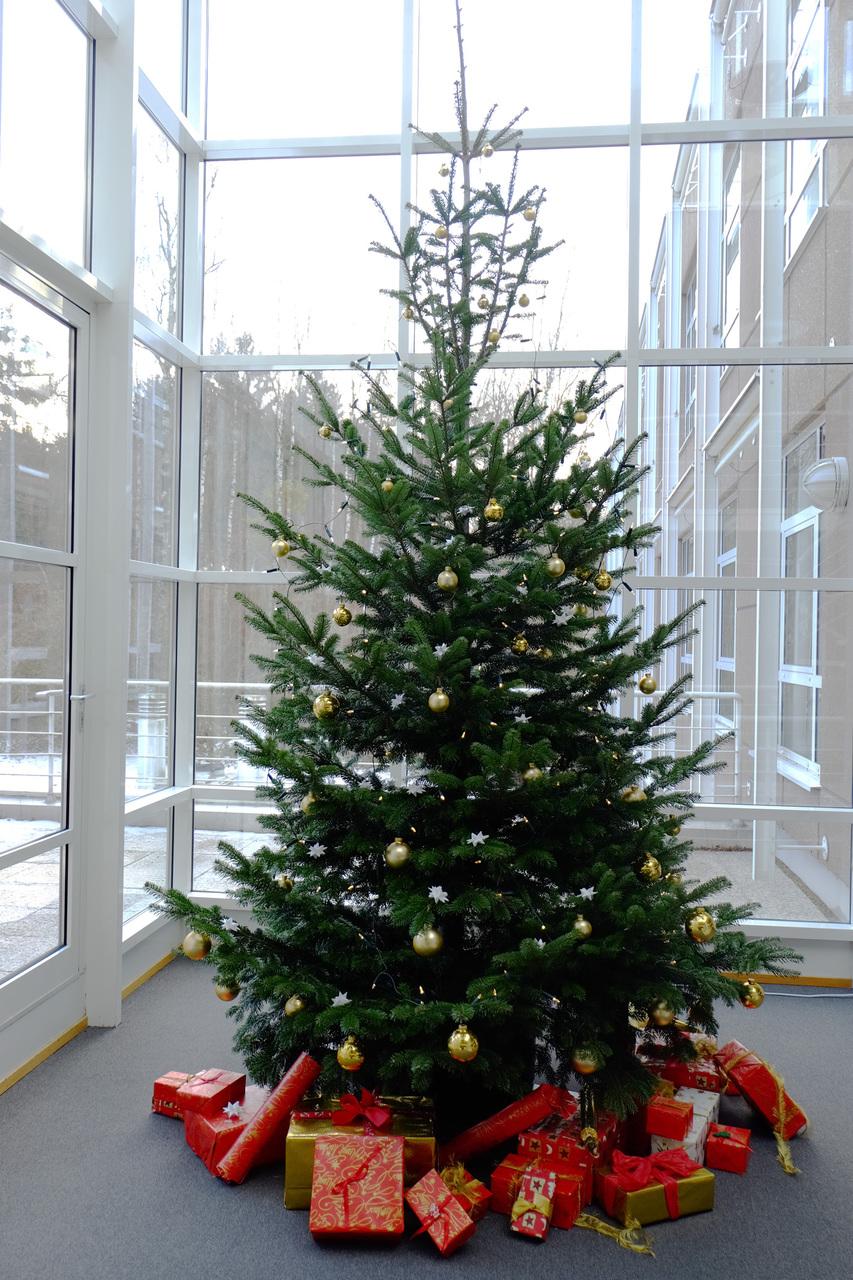 Weihnachtsbaum Herkunft.News Detail Universität Ulm